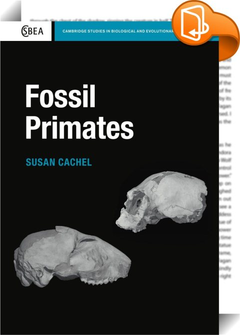 an analysis of anthropology fossil determination and explanation Anthropology emphasizes the holistic study of human beings, in both the past and the present, and introduces students to the four primary sub-fields (sociocultural anthropology, linguisuc anthropology, archaeology and biological anthropology) of the discipline.